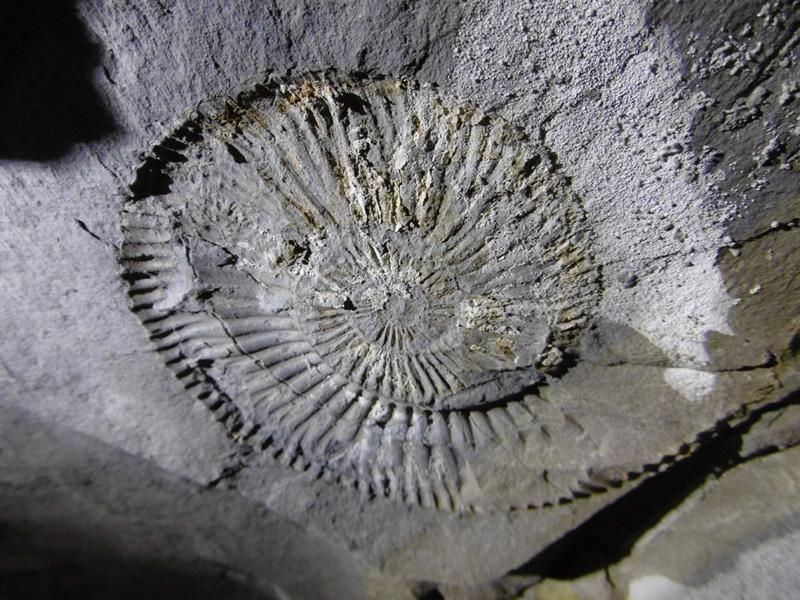 Fossile incrusté dans la paroi
